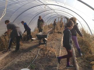 Apprenticeship program clearing out greenhouse